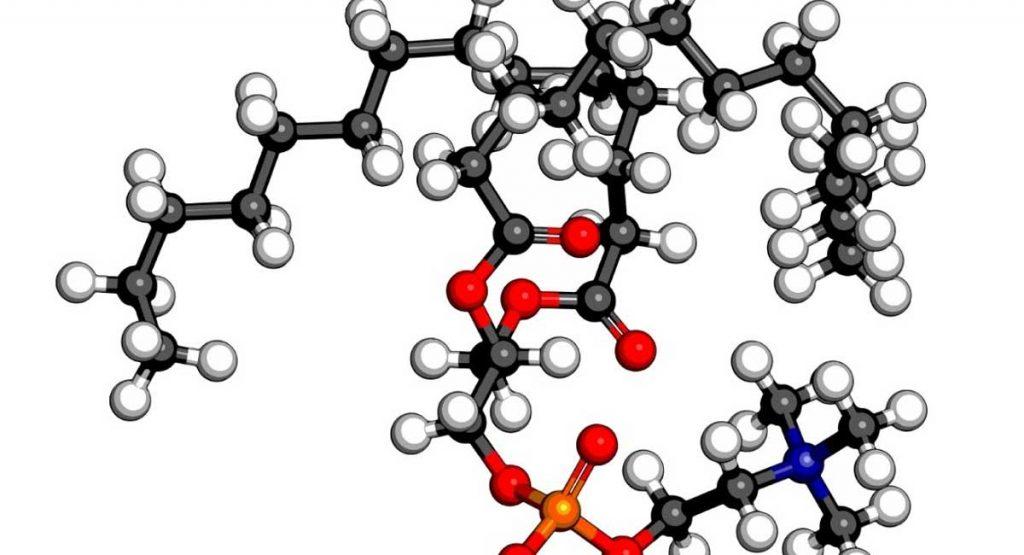 Phosphatidylcholine vs Phosphatidylserine